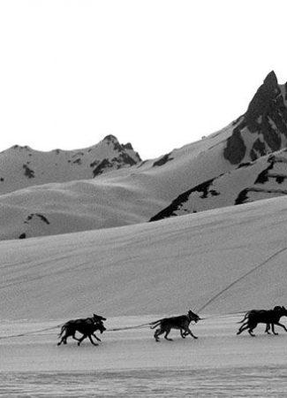 La Lekkarod, course de traineaux à chiens