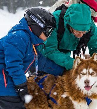 Viens caresser les Huskies - Chiens de Traîneaux